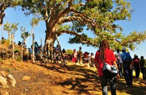 6a6. Approaching the Kindah Tree where the traditional ceremony takes place. Spectators sit under the Tree and watch from a short distance.